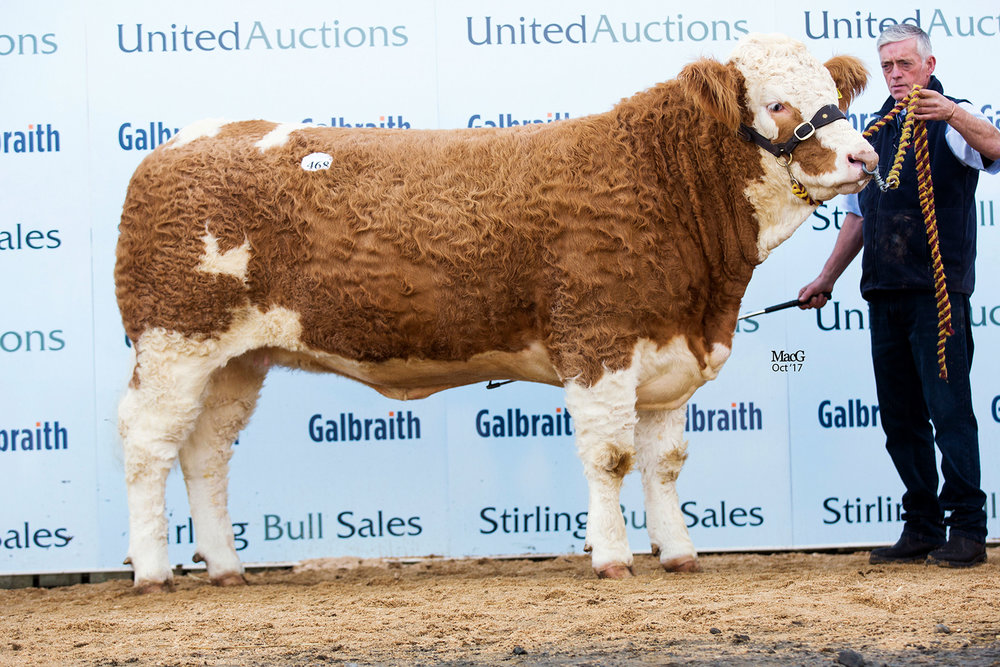 Stirling October Bull sales, including the Dispersal of the Sterling herd on behalf of Boddington Estates Ltd – Sale report