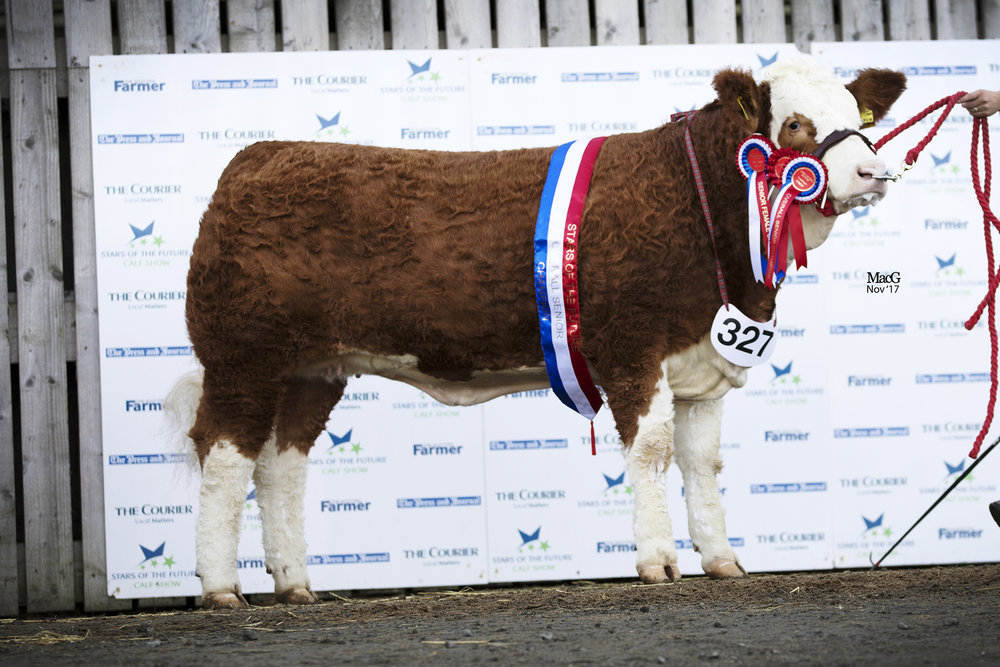 Stars of the Future Calf Show Results