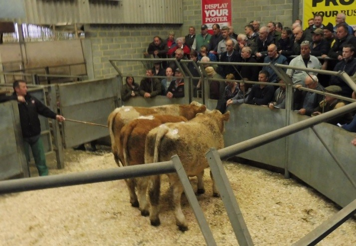 1st Simmental Sired Suckler Calf Show – Truro 17th October 2018