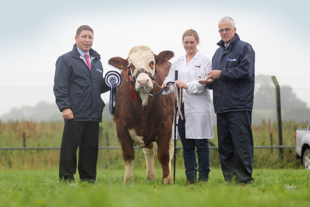 Simmental Female of the Year was Scribby Farms Exquisiter owned by Andrea Nelson, Rosslea. Adding their congratulations are Rodney Brown, agri-business manager, Danske Bank Enniskillen; and John Henning, head of agricultural relations, Danske Bank.