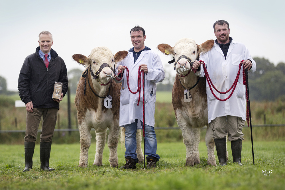 Philip Clarke, Merial Animal Health, sponsor, presents the runner-up award in the 2015 Ivomec Super Simmental Pair of the Year competition, to Neil and Alan Wilson, Newry, who exhibited Ballinlare Farm Edelweiss and Ballinlare Farm Esmeralda.