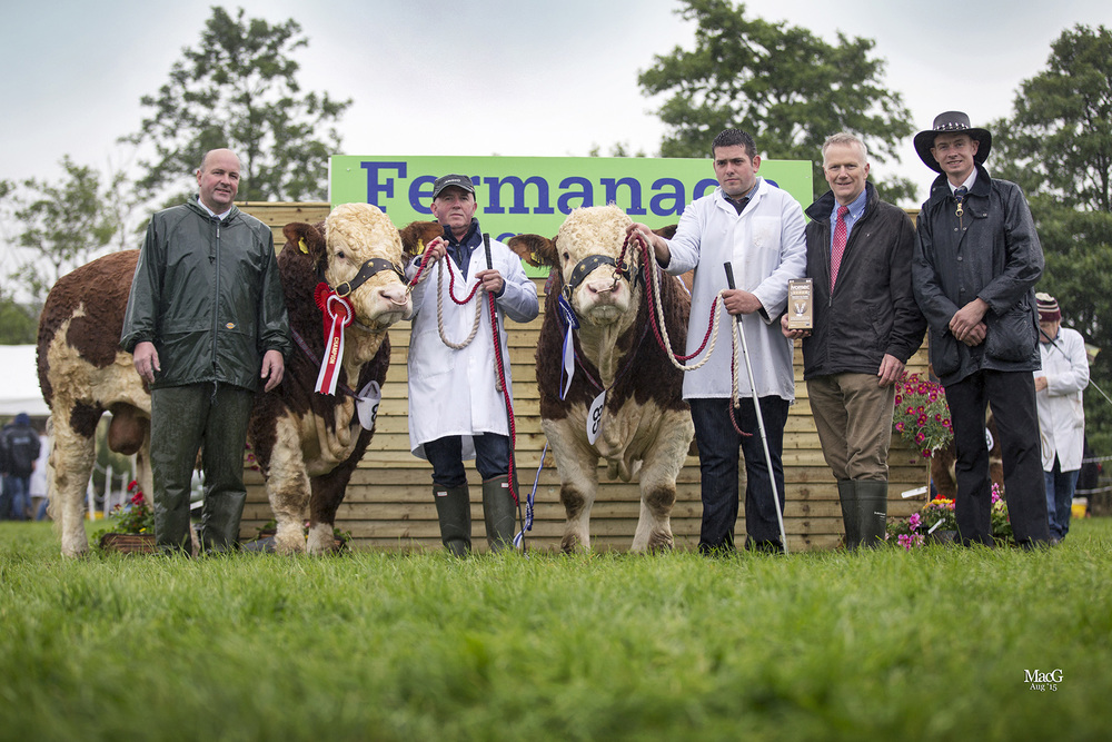 The 2015 Ivomec Super Simmental Pair of the Year are Kilmore Floyd and Kilmore Fitz bred by Chris Traynor, Armagh. Pictured from left: judge Michael Durno, Scotland; Chris Traynor and Richard McKeown; Philip Clarke, Merial Animal Health, sponsor; and club