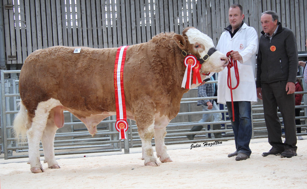 The male and supreme champion Ranfurly Husaldo ET sold for a top price of 4,300gns at the NI Simmental Club's Ballymena show and sale. Included is handler Jonny Hazelton and judge Kenneth Stubbs, Irvinestown.