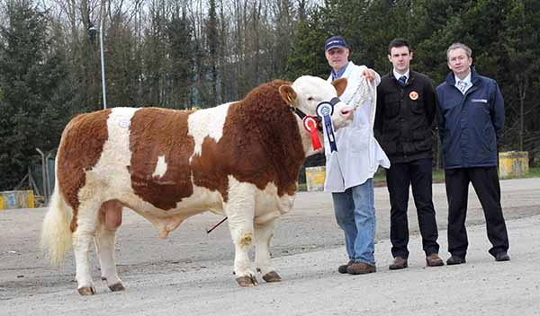 Male and supreme overall champion at the NI Simmental Club's spring show and sale, Dungannon, was Kilbride Farm Eric ET shown by Michael Robson, Doagh. Adding their congratulations are Andrew Clarke, Tynan, judge; and Andrew Tecey, Danske Bank, sponsor.