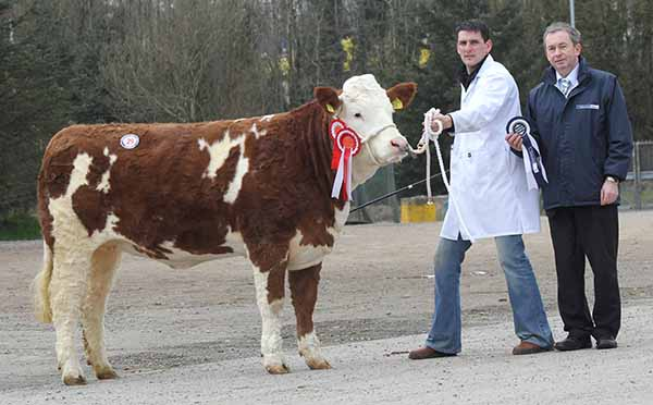 Female and reserve supreme champion was Knockreagh Emily which sold at 2,600gns for Conrad Fegan, Rostrevor. Also pictured are judge Andrew Clarke, Tynan; and Andrew Tecey, Danske Bank, sponsor.