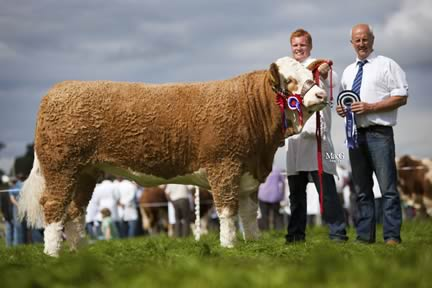 Female and supreme overall Simmental champion was Slieveroe Caroline shown by Christopher Weatherup, Ballyclare. Adding his congratulations is club chairman Nigel Glasgow.