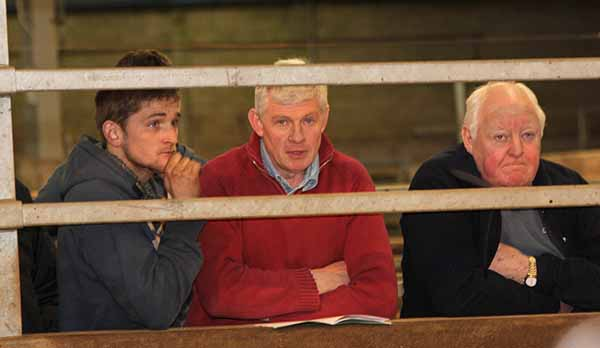 Spectators around the showring at the NI Simmental Cattle Breeders' Club spring show and sale, Dungannon.