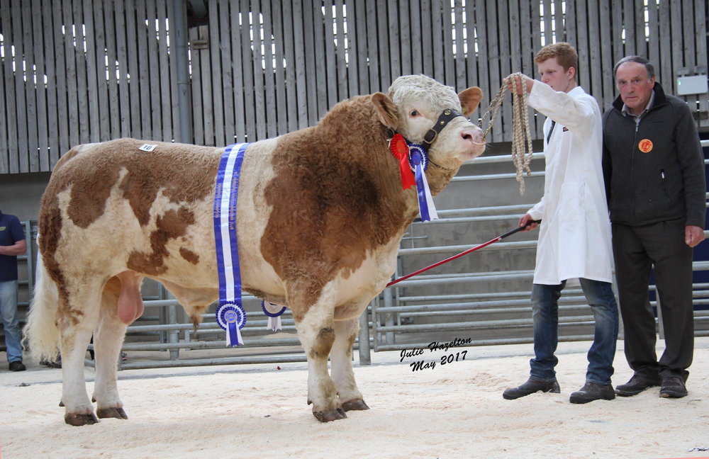 Reserve male and reserve supreme champion at the NI Simmental Club's evening show and sale in Ballymena was the 3,900gns Maghereagh Gandalf exhibited by Jonny McCammond, Randalstown. Included is judge Kenneth Stubbs, Irvinestown.