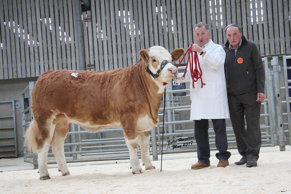 Adrian Richardson, Maguiresbridge, exhibited the female champion Cleenagh Honeybunch sold for 2,200gns. Adding his congratulations is judge Kenneth Stubbs, Irvinestown