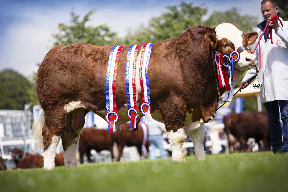 Ranfurly Jameson was junior champion, male champion and supreme overall champion at the NI National Simmental Show, held at Omagh.