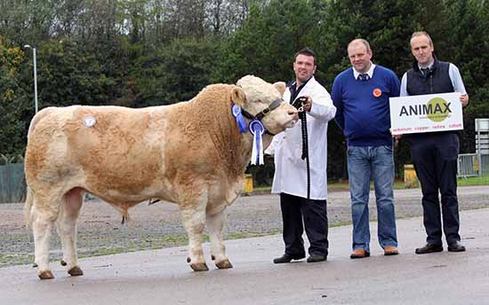 Reserve male champion was Ballinlare Farm Equaliser shown by Neil Wilson, Newry. Included are judge Matthew Cunning, Glarryford; and sponsor Neil Acheson, Animax.