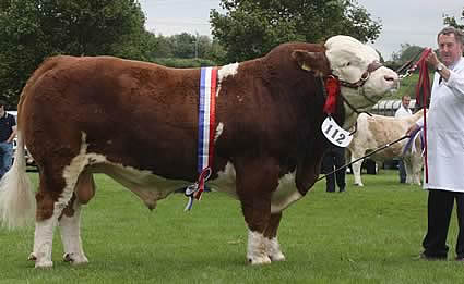 The reserve Male of the Year was Drumlone Anchor owned by Messrs Richardson and Nelson.