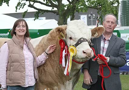 Announcing the semen export deal to Kenya are Anne Spencer, Asda, and Joe Wilson, Newry, with his Simmental stock bull, Auchorachan Wizard.