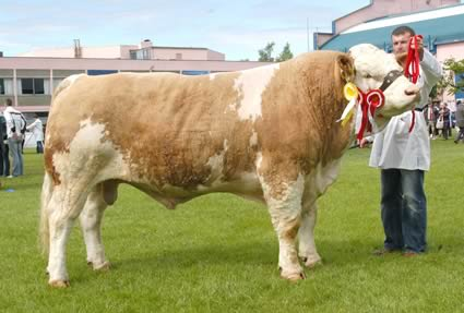 Alan Wilson, Newry, exhibited Auchorachan Wizard, the first prize senior Simmental bull and reserve male champion