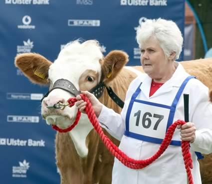 Thelma Gorman, Armagh, with her prize winning Simmental heifer, Corhammock Makelda