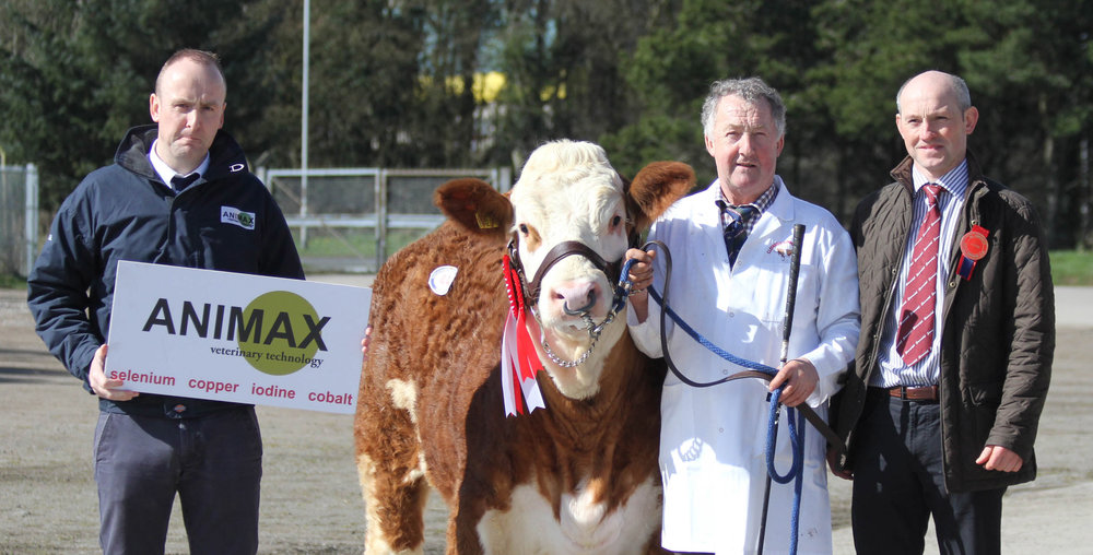 Adrian Richardson, Maguiresbridge, exhibited the female champion Cleenagh Gaynor sold for 2,600gns. Included are Neill Acheson, Animax, sponsor; and judge Frank Kelly, Tempo.