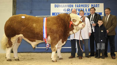Champion bull, Drumbulcan Waterfall pictured with Harold Stubbs, Alan and Leigh Burleigh, Edmund Lowe Agri Business Manager from sponsor Northern Bank and judge Kenny Veitch.