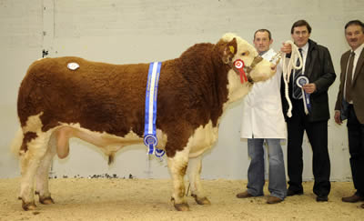 Reserve Champion bull Camus Ascot from Joe Campbell, pictured with handler Frank Kelly, Northern Bank sponsor Edmund Lowe and judge Kenny Veitch.