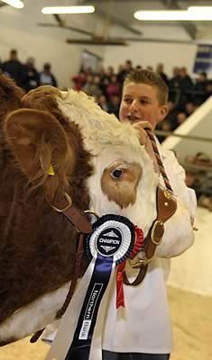 Champion bull in the sale ring being lead by Alan Burleigh