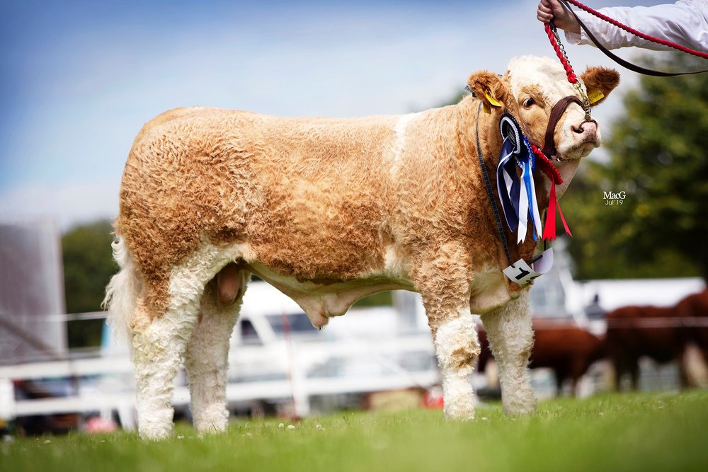 Five-month-old Breaghey Kingdom, owned by Andrew and Zara Clarke, Tynan, was the winner of the bull calf class.