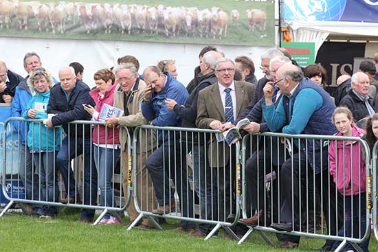 Spectators around the show ring at Balmoral Show.