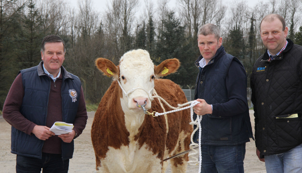 Discussing plans for the NI Simmental Club's Woodcraft Kitchen (Kilrea) Junior Heifer Derby are, from left: Robin Boyd, County Antrim Agricutural Association; sponsor Eamon McCloskey; and club chairman Matthew Cunning.