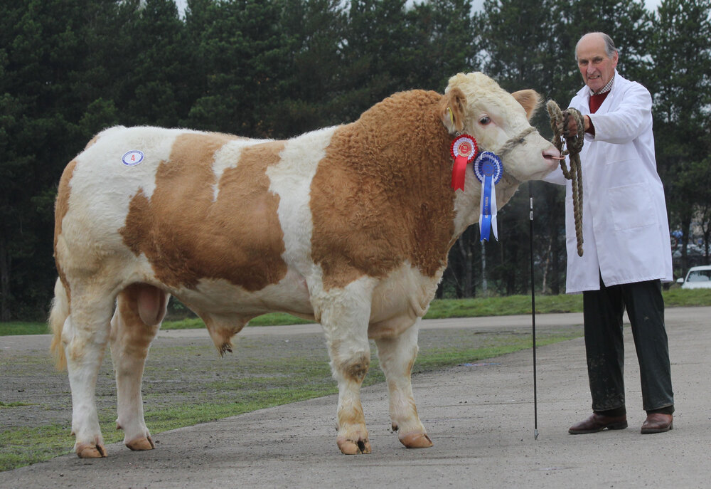 Male and reserve supreme champion Longbeach Juncker realised 2,700gns for Sean Burns, Rathfriland