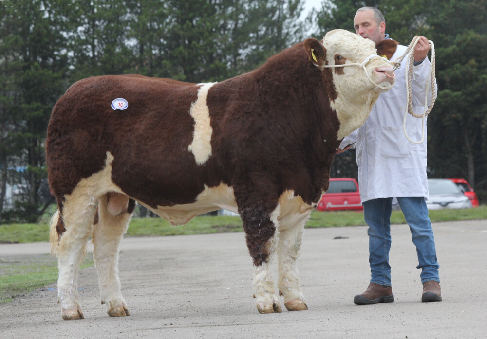 Reserve male champion was Rehall Jordan exhibited by Keith Stubbs, Irvinestown.