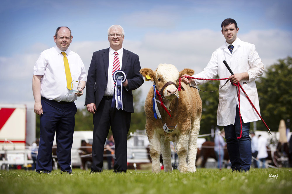 Reserve male champion was Breaghey Kingdom bred by Andrew Clarke, Tynan. Adding their congratulations are Adrian Adams and Kilian McDonnell, Danske Bank.