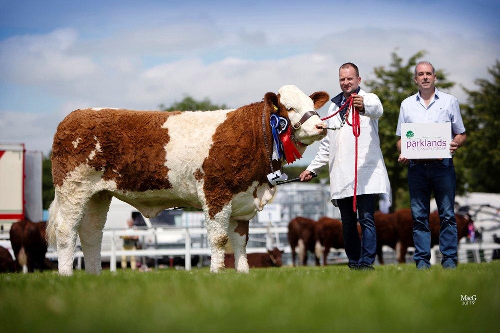 Reserve female champion was the Intermediate heifer class winner Ranfurly Weikel 23rd. Jonny Hazelton is pictured with Ian Stewart, Parklands Veterinary Group, class sponsor.