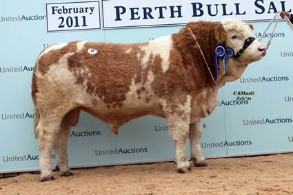 Reserve Intermediate Champion Kilbride Farm Andrew sold by W H Robson & Sons for 7,000gns.