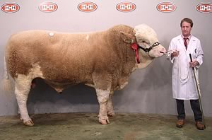 Glebehill Nut the Reserve Champion from RW & G Hudson made the top price of 2,200gns