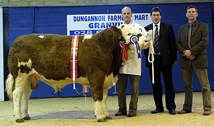 Kilbride Farm Tiger Reserve Supreme Champion – W. H. Robson & Sons – Born February 2006 – Sired by Seaview Prince Charming – Sold for 3000 gns.