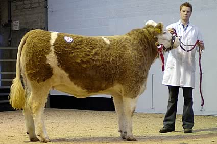 Lisglass Tiffany Female Champion – J.L and C. J. Weatherup – Sired by Omorga Prince – Sold for 2500 gns.