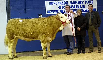 Stralongford Sandra Reserve Female Champion – J.J. Hanna – Sired by Omorga Murray – Sold for top female price of 2700 gns.