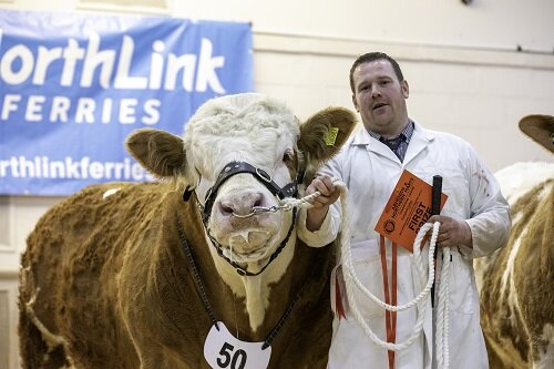 Aberdeen and Northern Marts show and sale 26th February 2020 – Sale report