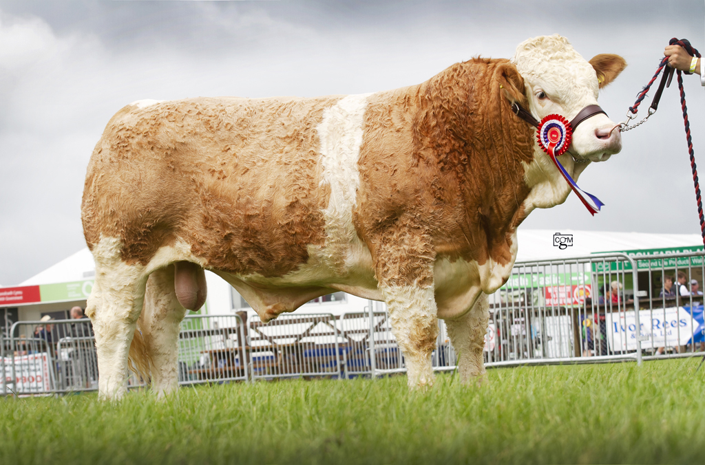 Welsh National Show – Pembrokeshire County 14th August to 16th August 2018 – Judge Mr C Martindale