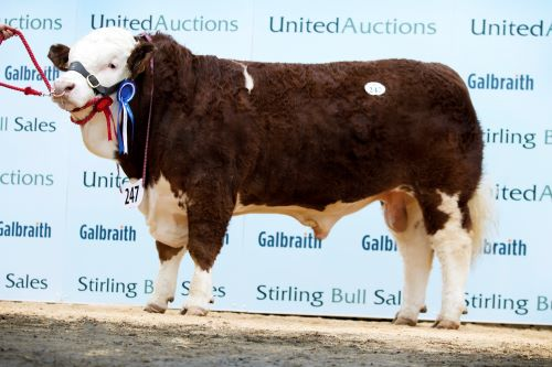 Stirling February Bull Sales 18th & 19th February 2018 – Sale Report