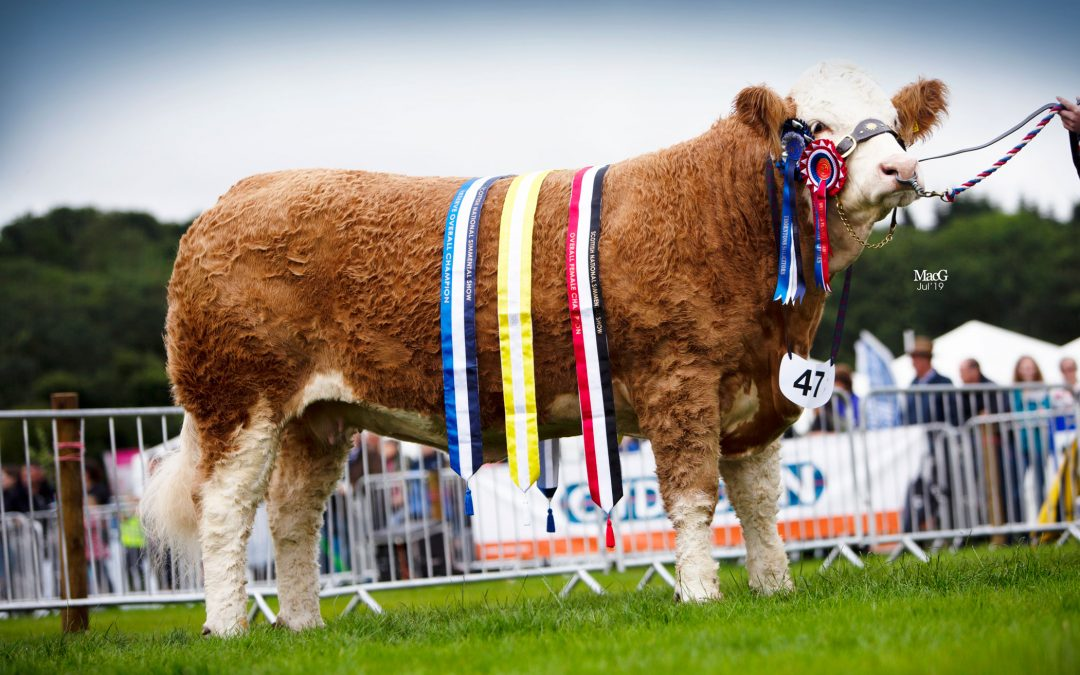 Scottish National Show – Kelso – 26th-27th July 2019 – Judge David Donnelly