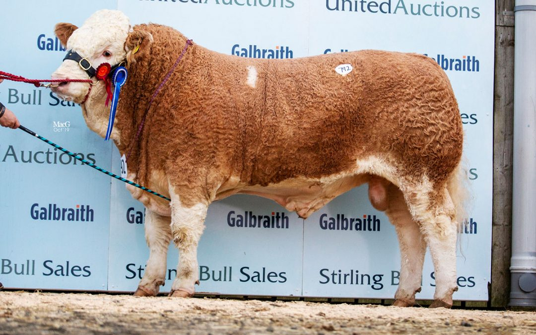 Stirling October Bull Sales 20th – 22nd October 2019 – Sale Report