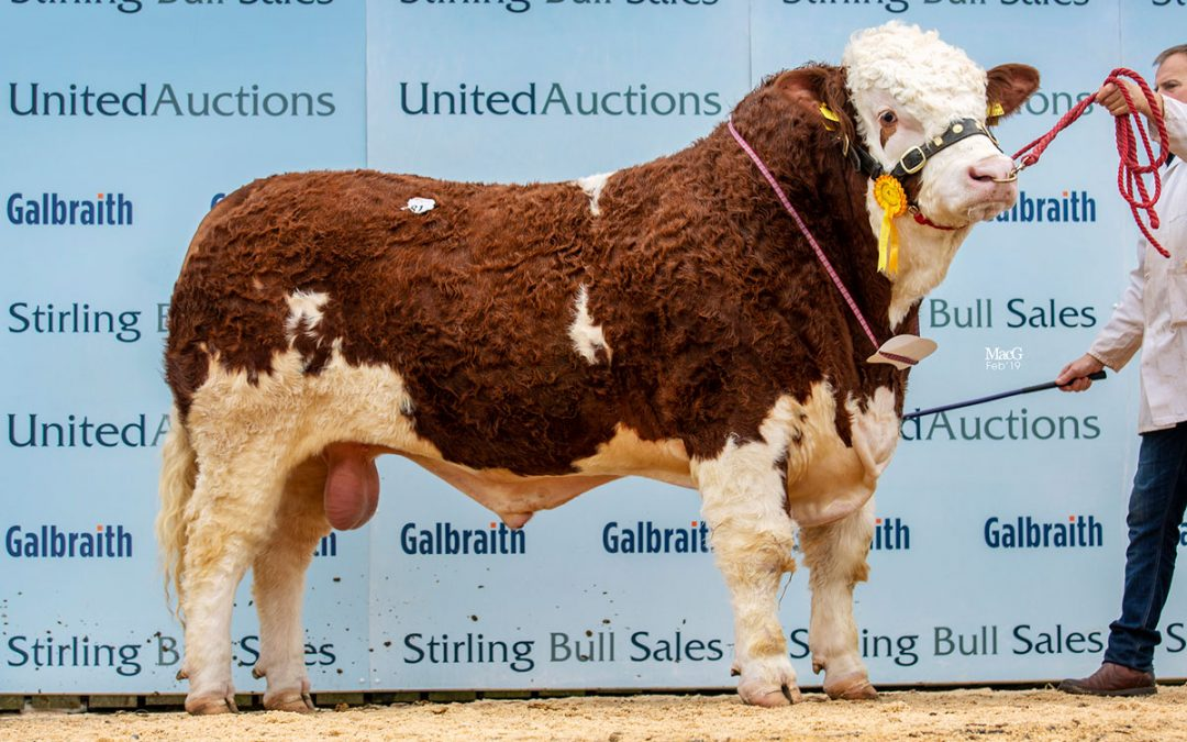 Stirling February Bull Sales – 17th & 18th February 2019
