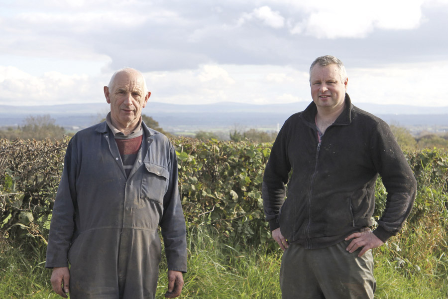 Simmentals Dual-Purpose Traits Paying Dividends at Ballystrone