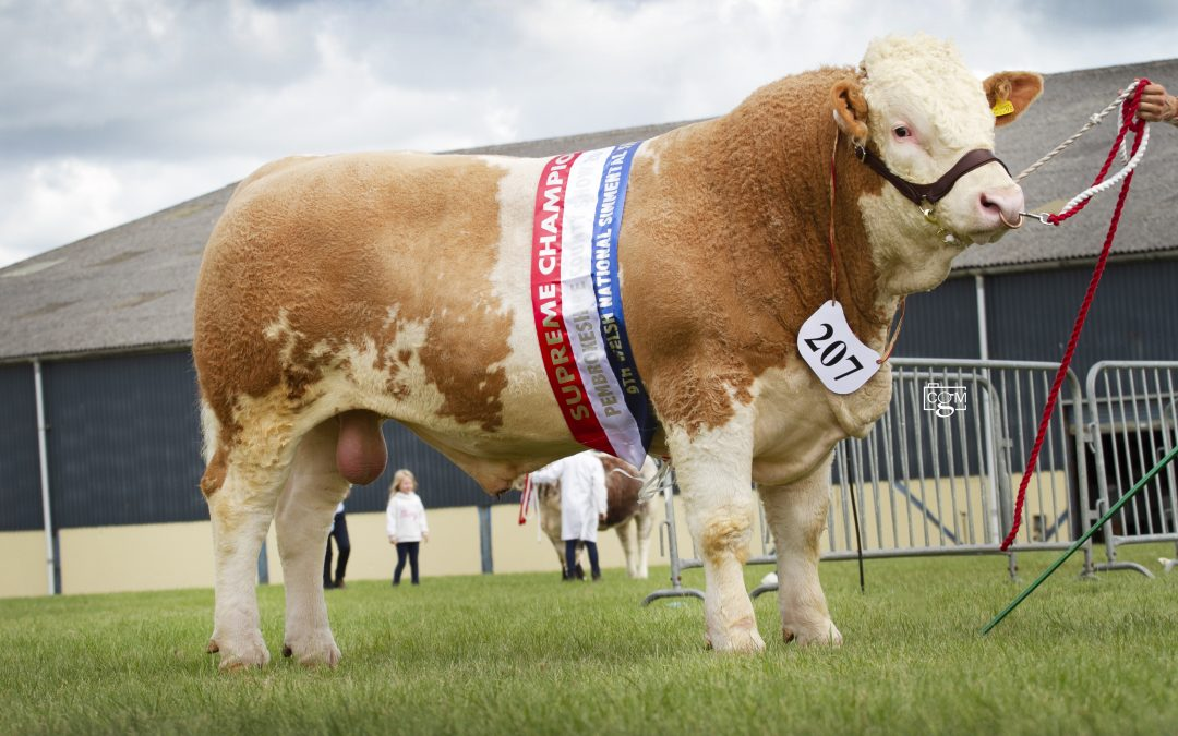 Welsh National Show at Pembroke County Show. 13th-15th August 2019 – Judge, Mr J W May
