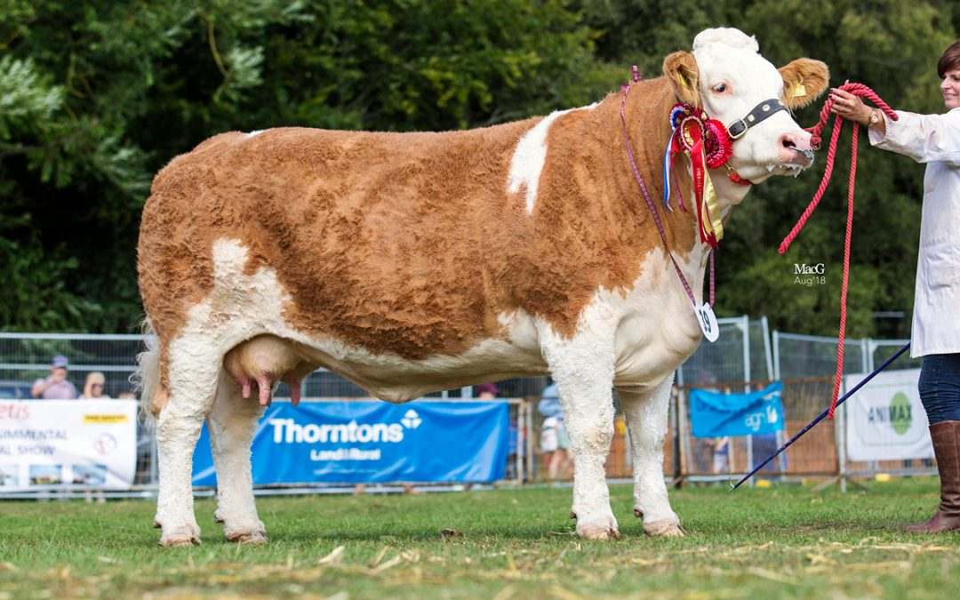 Scottish National Show – Turriff 5th August to 6th August 2018 – Judge Mr S Key
