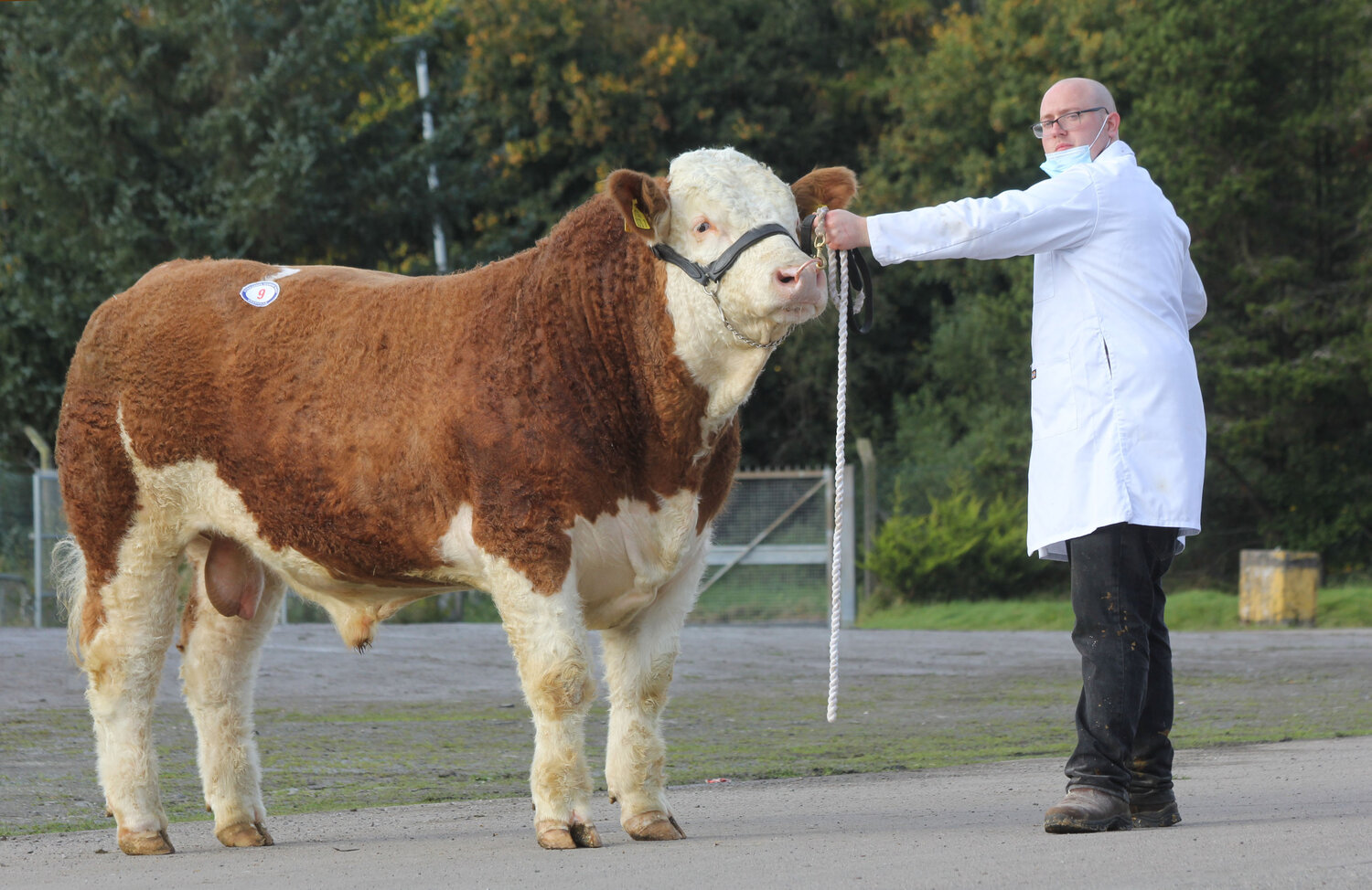 WELLBRAY KINGBEE SOLD FOR 3,500GNS