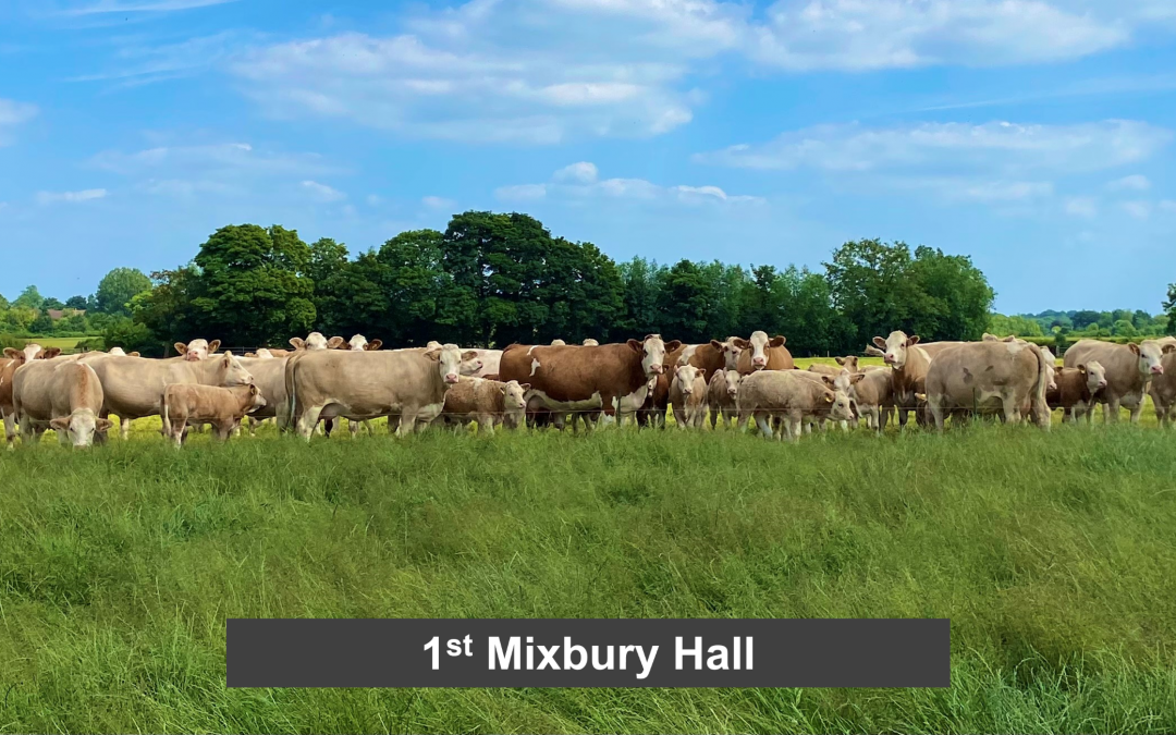 WINS FOR MIXBURY HALL AND EMMA STRONACH, ISLAVALE, IN THE FIRST TWO SPECIAL CLASSES OF THE 2021 VIRTUAL SIMMENTAL SHOW!